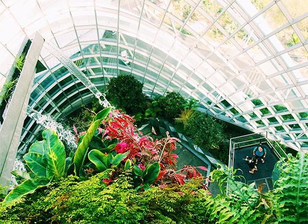 Dubai Plants Nurseries Dubai | Dubai Landscaping Company